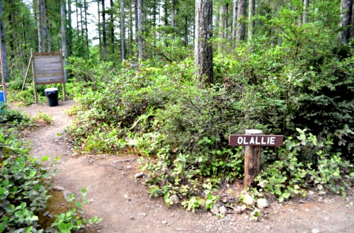 Click to find out more about Olallie